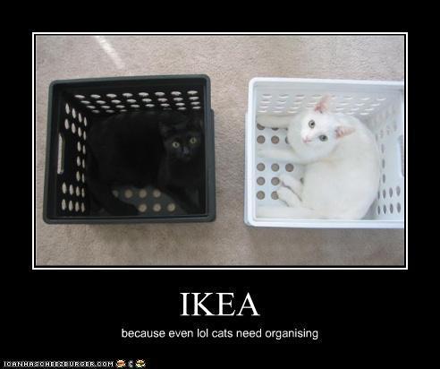 Ikeacats