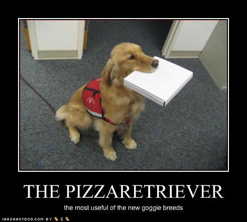Funny-dog-pictures-pizza-retriever
